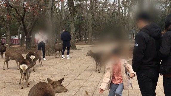 奈良公園の鹿から逃げる子供