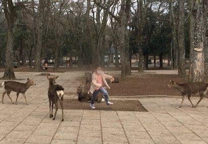 東大寺の鹿に追いかけられて逃げる子供