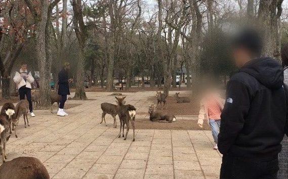 奈良公園の鹿に追い回される子供